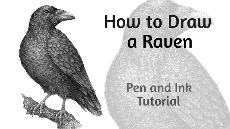How to Draw a Raven with Pen and Ink