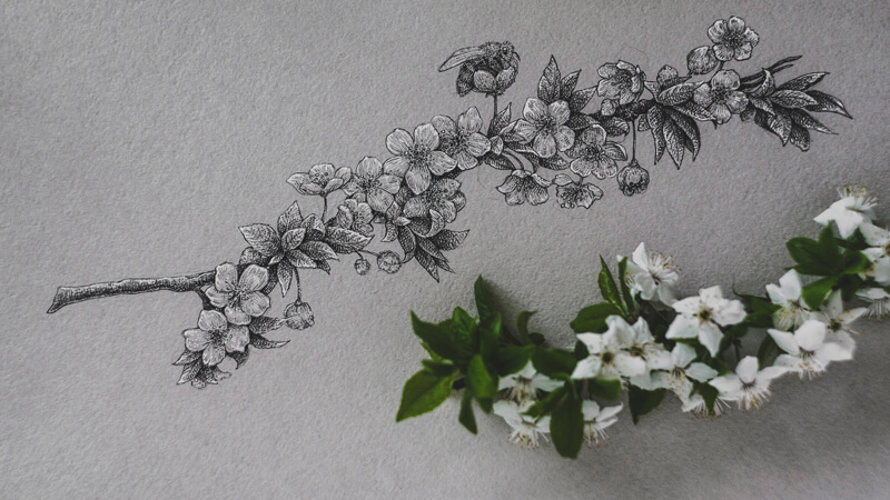 Drawing Flowers with Ink on Toned Paper