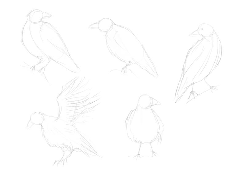 Sketches of a raven