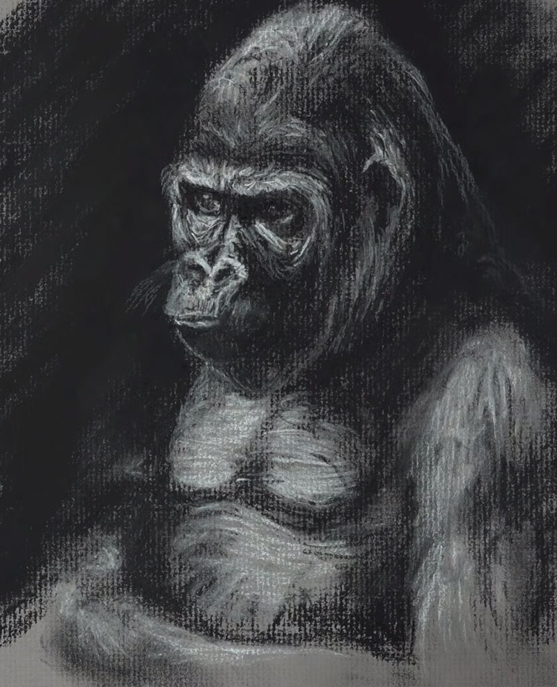 Charcoal Sketch of a Gorilla