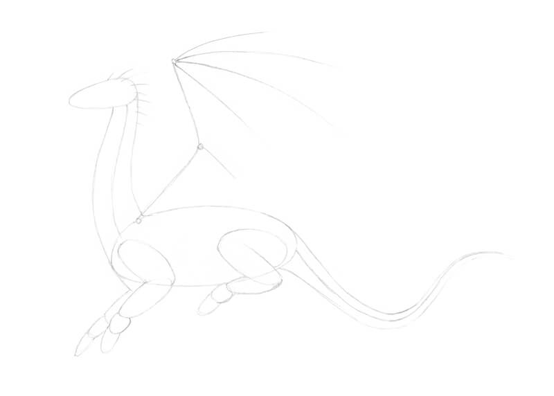 Drawing the structure for the body of the dragon