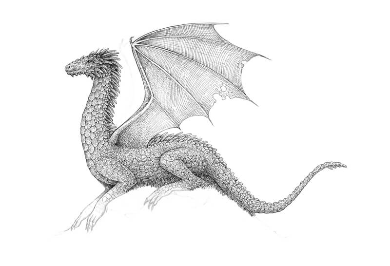 Drawing dragon wings with pen and ink