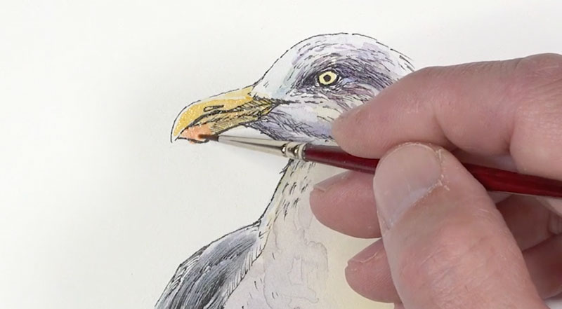 Adding color to the beak and eye of the  seagull