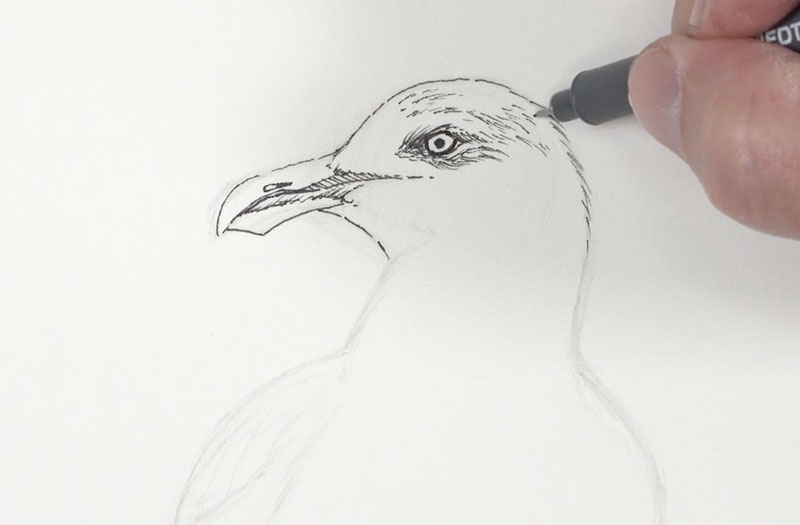 Adding ink to the head and the eyes of the seagull