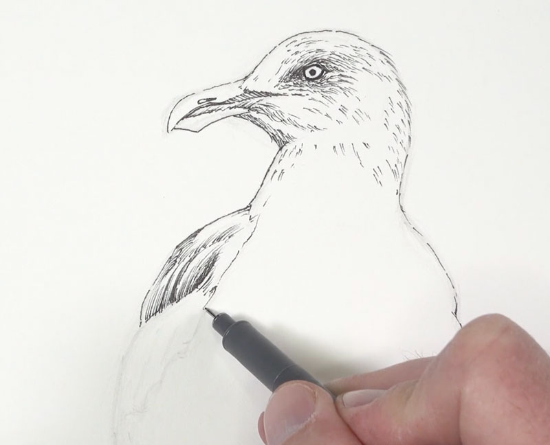 Adding ink to the body of the seagull