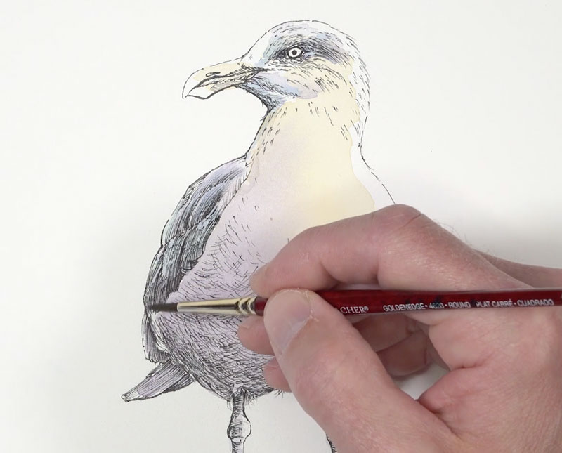 Developing shadows and textures with watercolor on the seagull
