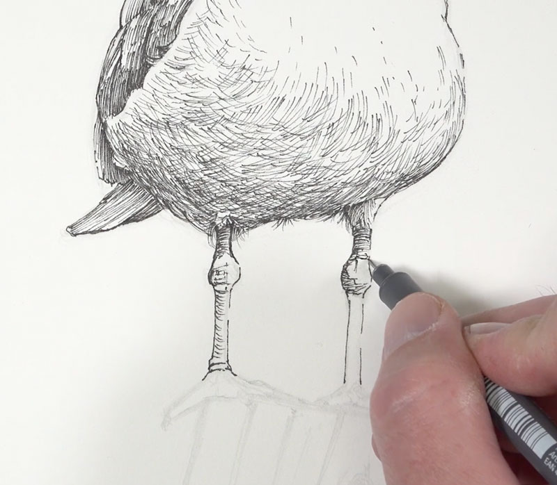 Drawing the legs of the seagull with ink