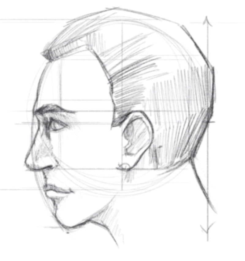 Sketch a face side view - step - 7 - Add the hair