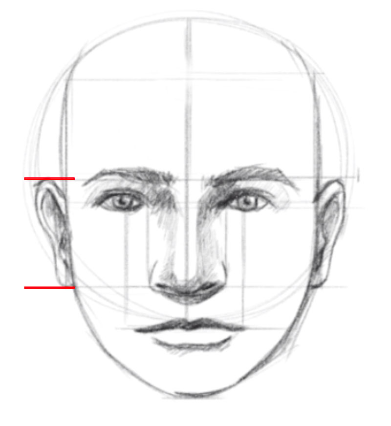How to draw a face - step - 8 - Draw the ears