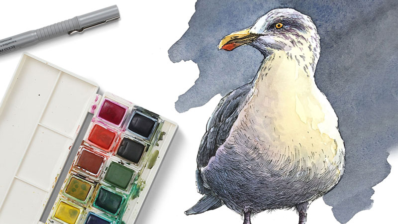 Pen and watercolor lesson - Seagull