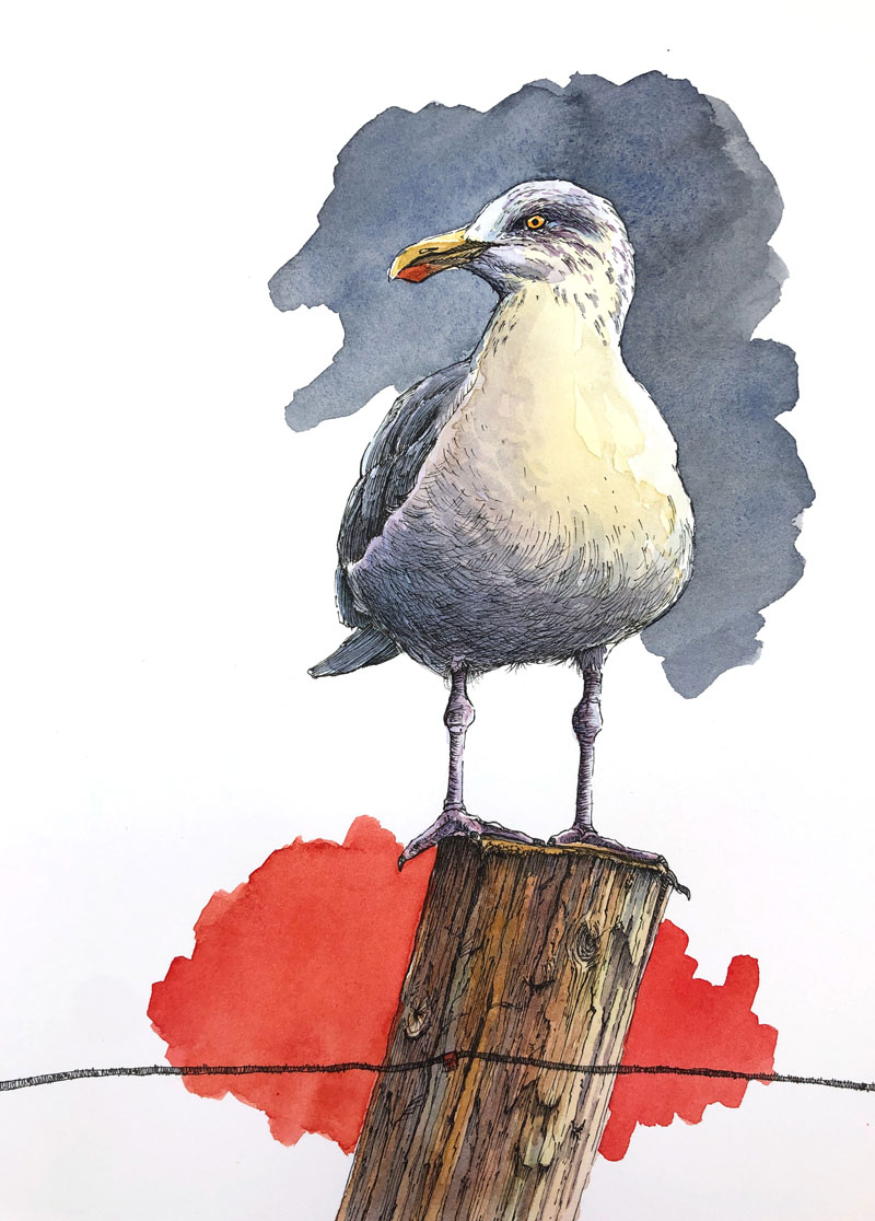Watercolor and Ink Seagull Painting