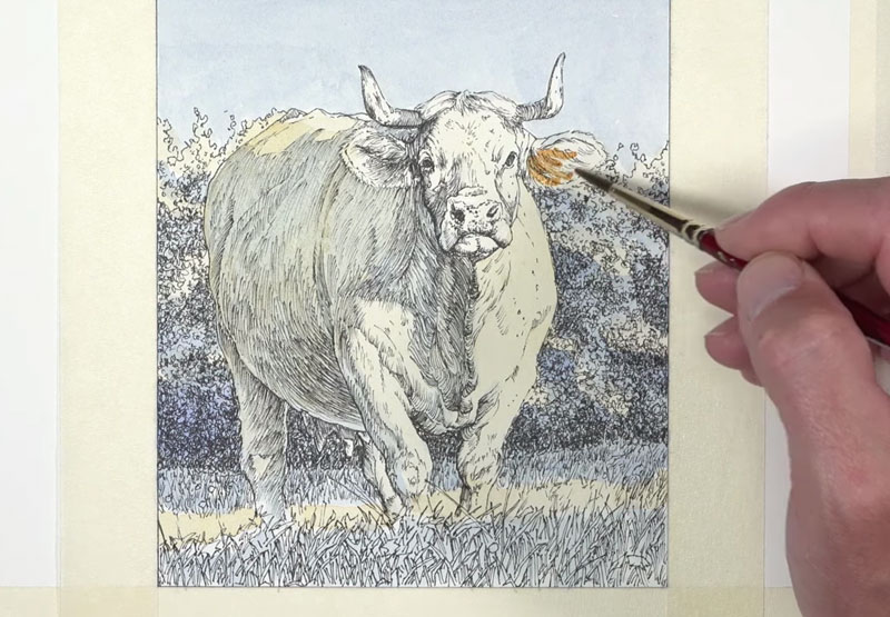 Adding warmer colors to the cow with watercolor