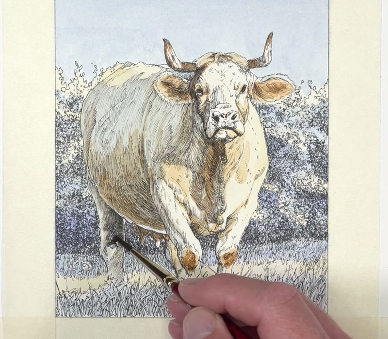 Adding darker values with browns and grays on the body of the cow