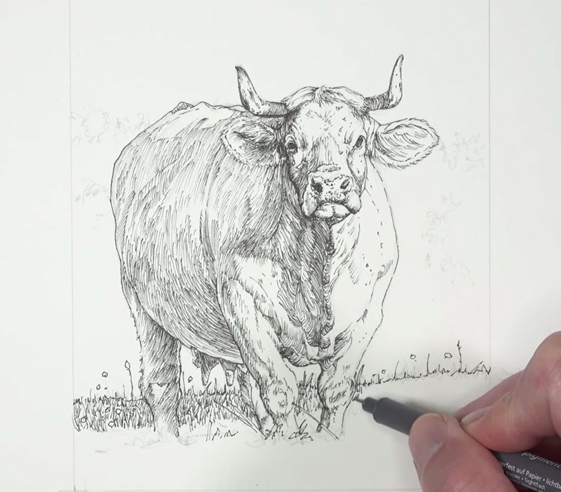 Drawing the grassy field underneath the cow
