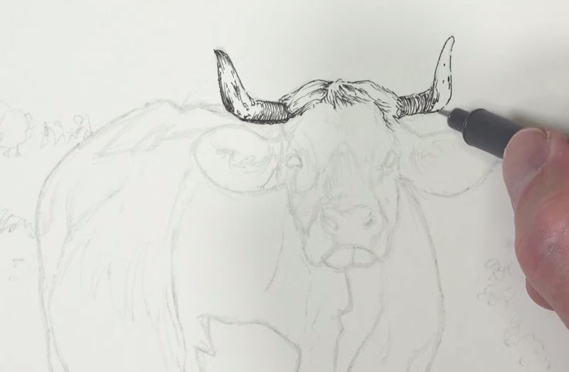 Pen and ink applications are made to the head of the cow