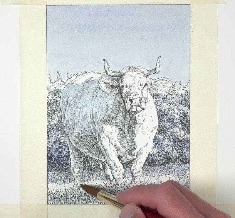 Applying watercolor to the background and the body of the cow