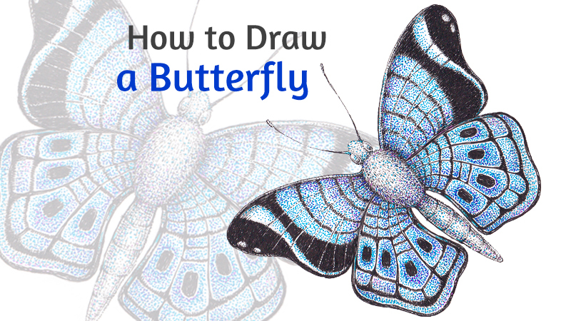 How to draw a butterfly with pen and ink