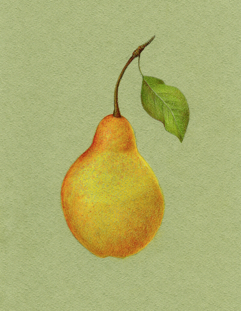 Layering yellow and red colored pencils to the pear