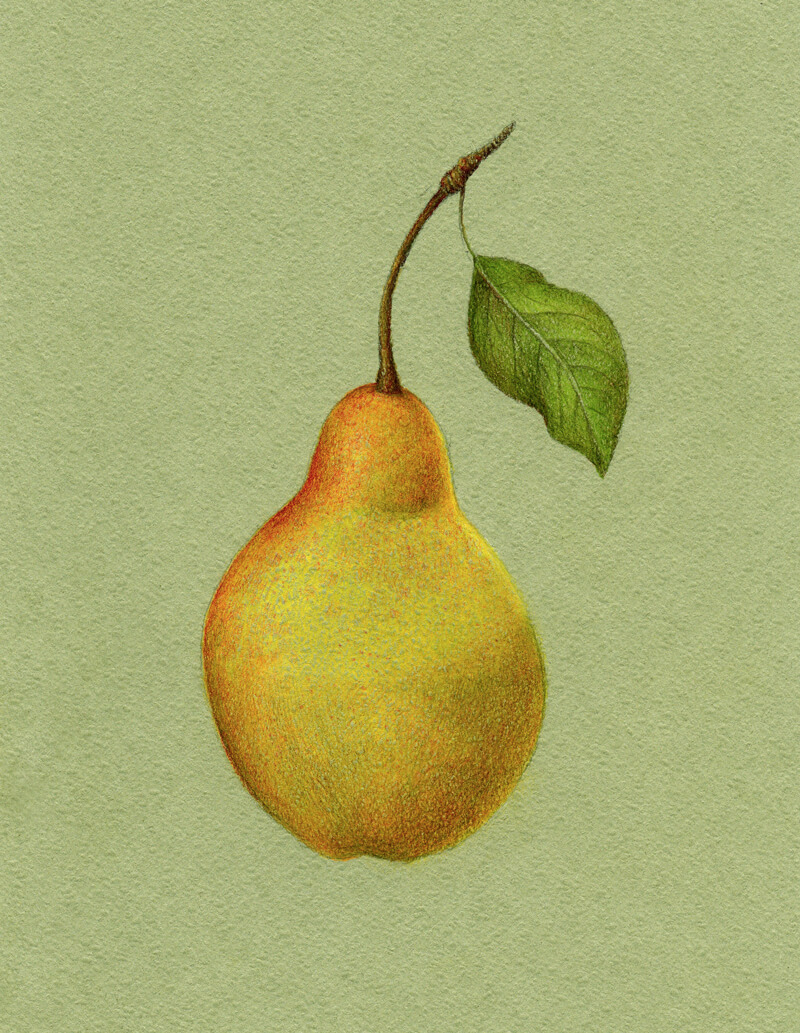 Developing the core shadow on the body of the pear