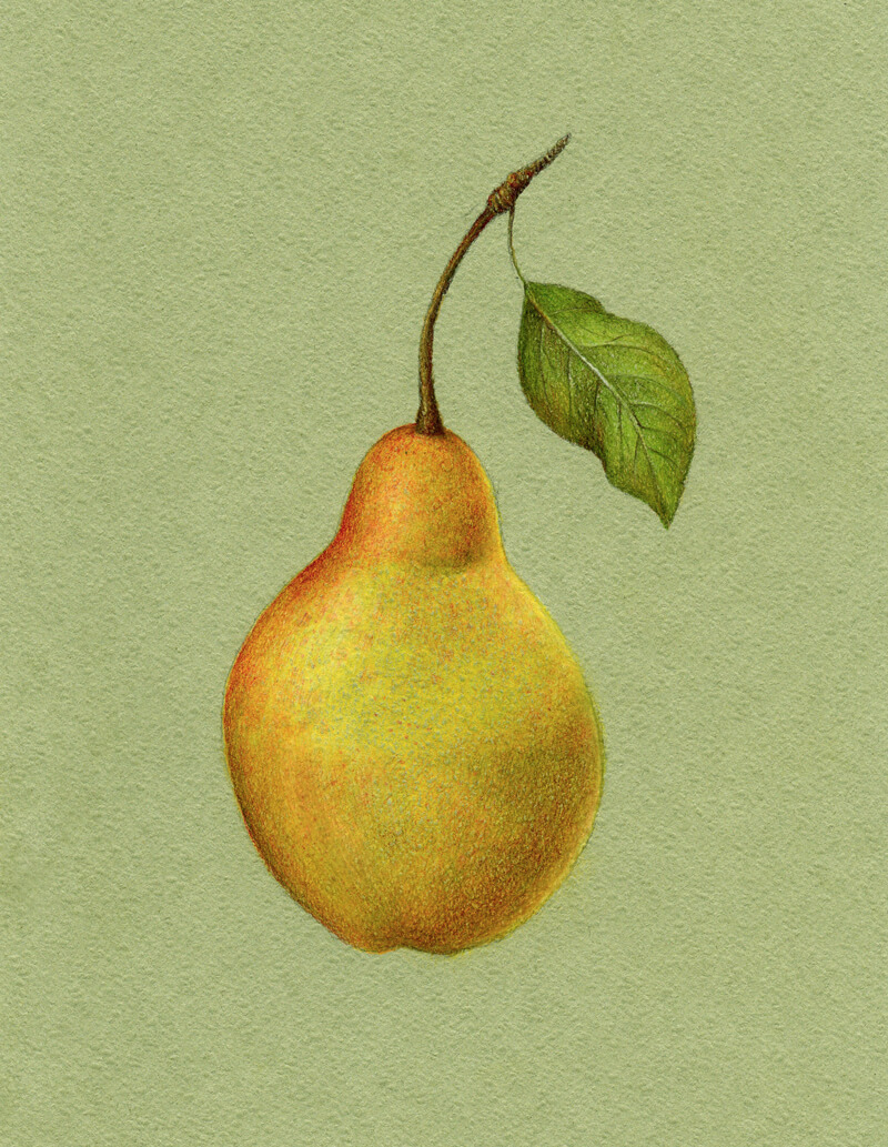 Colored pencil and pastel drawing of a pear