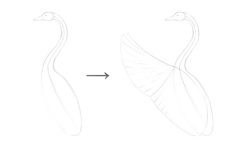 Drawing the basic shapes of the body of the swan