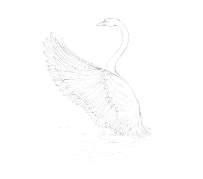 Finished graphite sketch of a swan