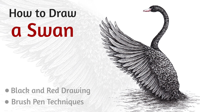 How to Draw a Black Swan with Pen and Ink