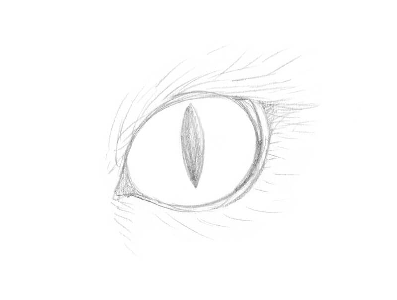 Pencil sketch of a cat eye