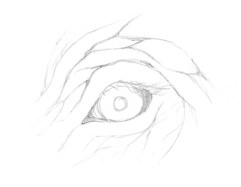 Pencil sketch of an elephant's eye