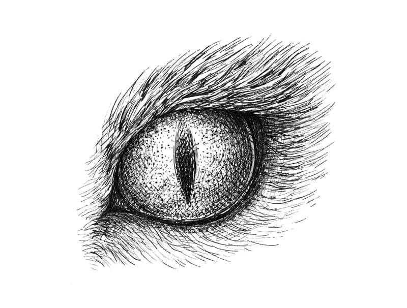 Drawing of a cat eye with pen and ink