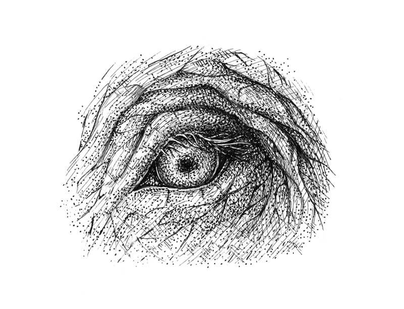 Pen and ink drawing of an elephant eye