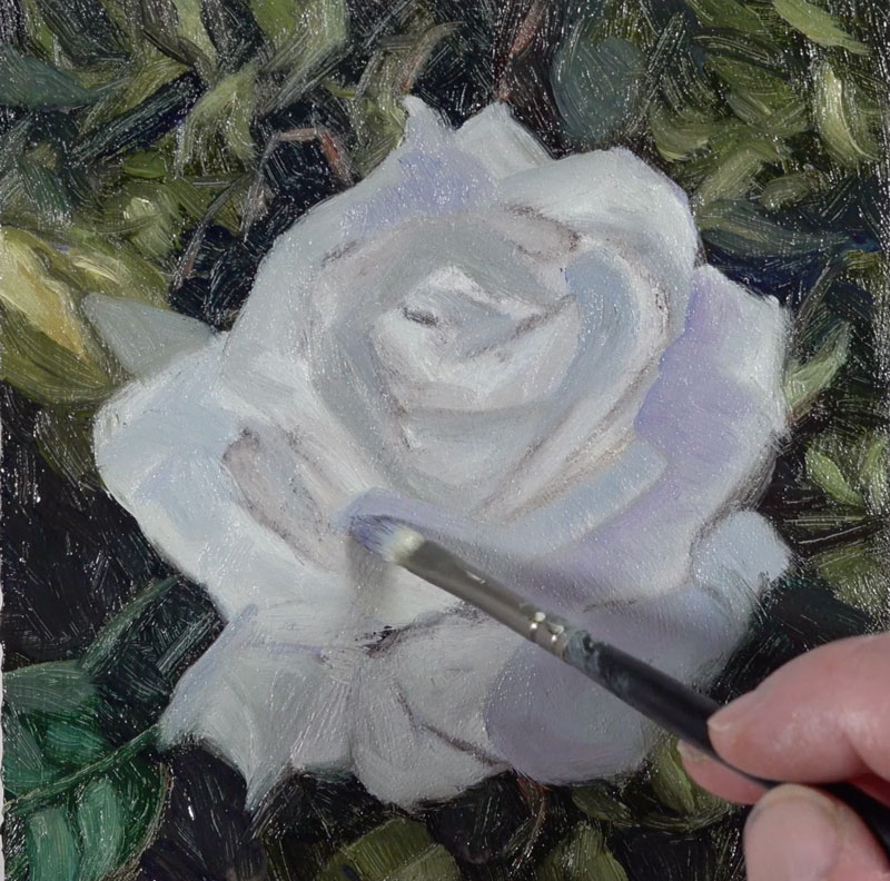 Warming shadows on the rose with purple
