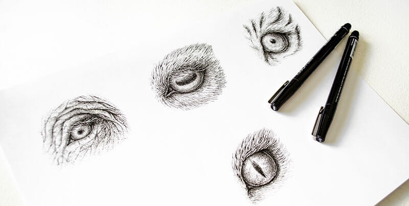 Pen and ink drawings of animal eyes