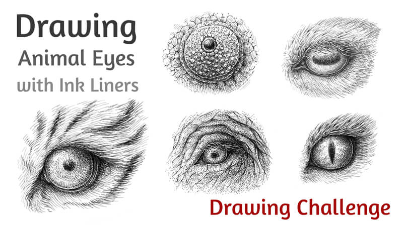 How to Draw Animal Eyes with Pen and Ink