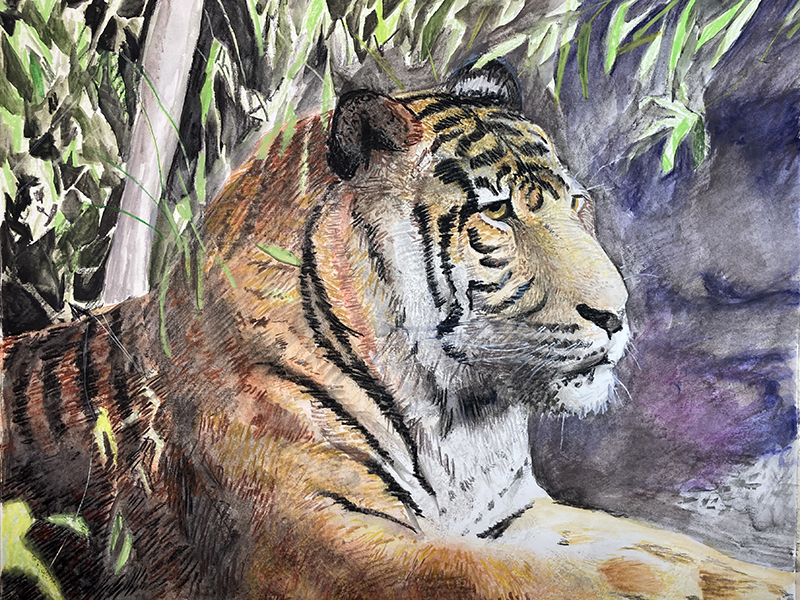 Water Soluble Crayon Drawing of a Tiger