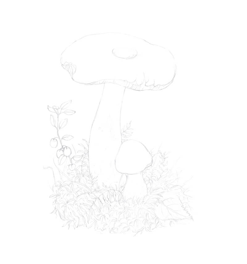 Completed pencil sketch of a mushroom