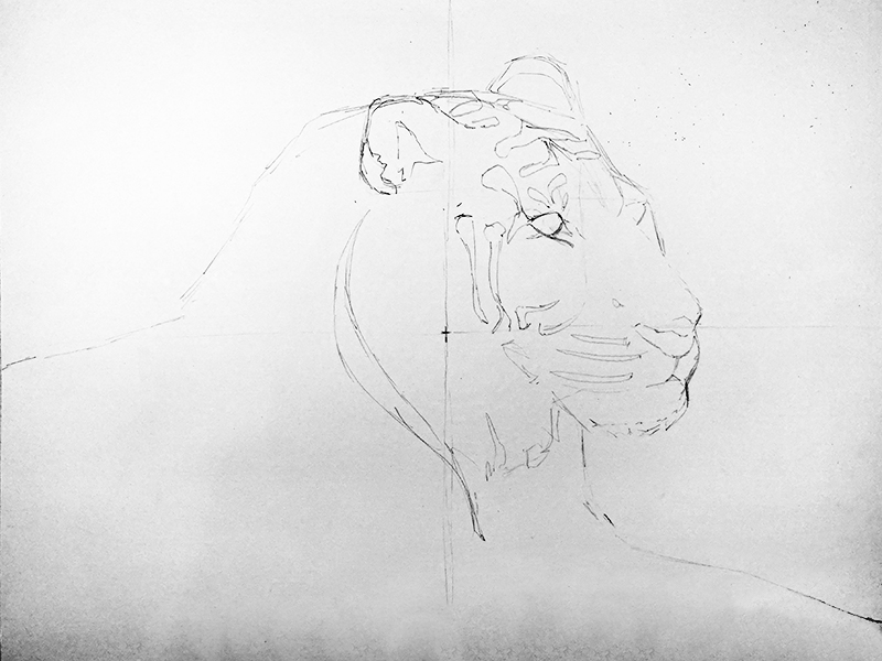 Pencil line drawing of a tiger