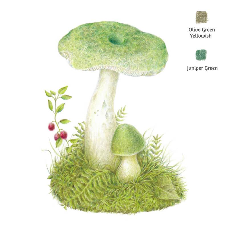 Muting greens on the drawing of a mushroom