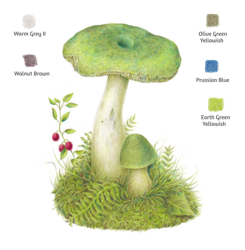 Colored pencil drawing of a mushroom