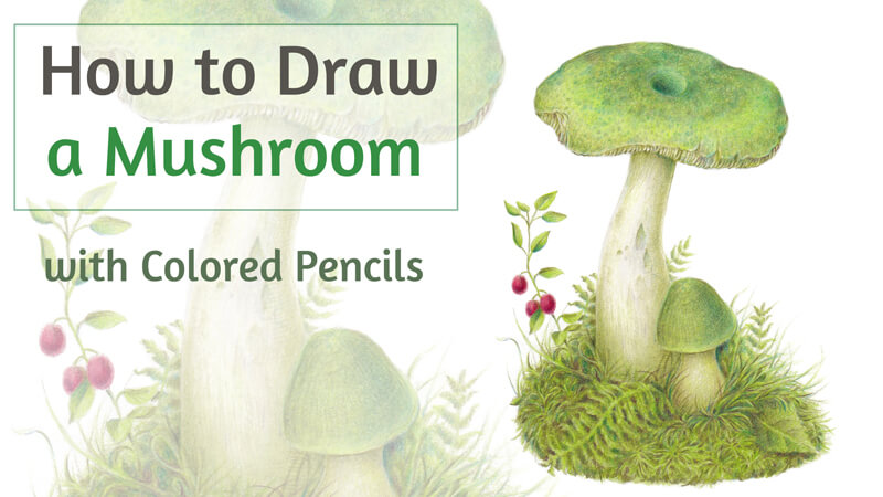 How to Draw a Mushroom with Colored Pencils