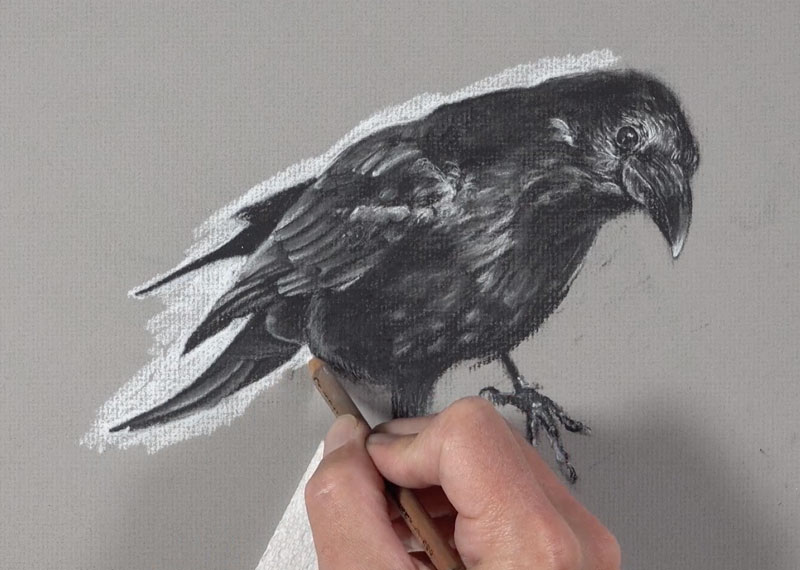 Adding a background to the drawing with white charcoal