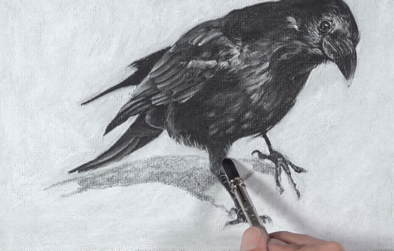 Drawing the cast shadow under the raven