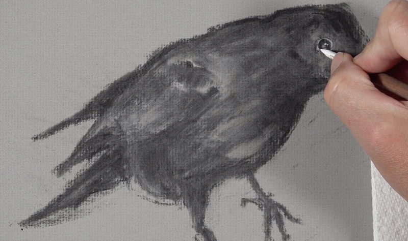 Drawing the eye of the raven with white charcoal