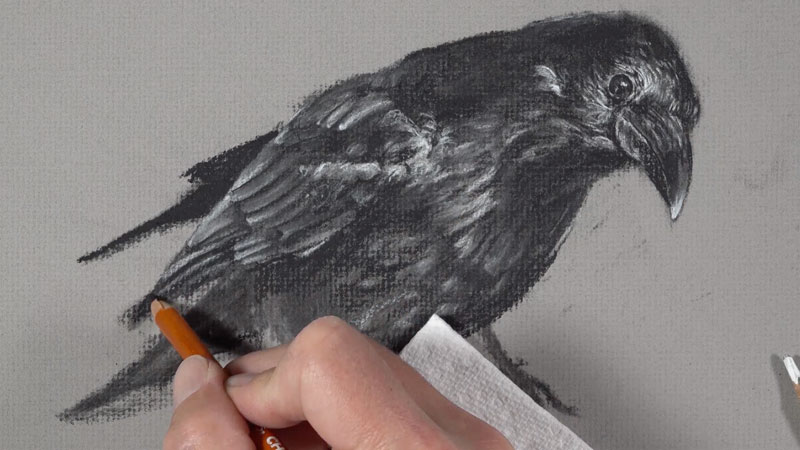 Drawing the feathers of the raven