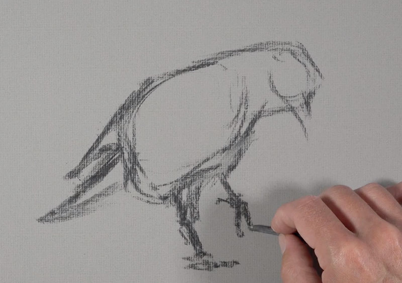 Sketching the raven with vine charcoal