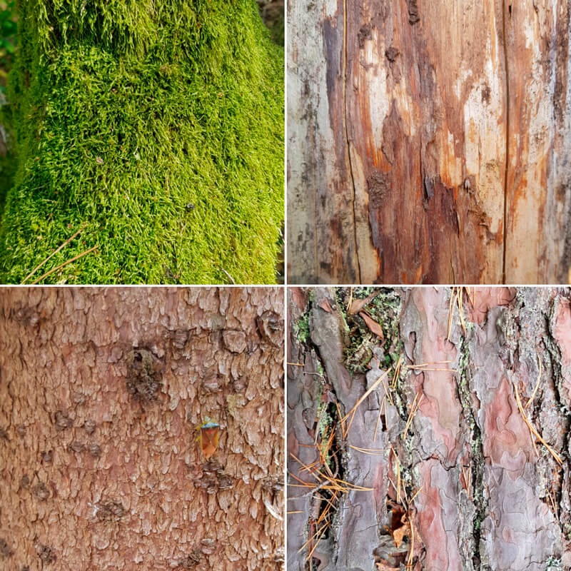 Examples of various natural textures