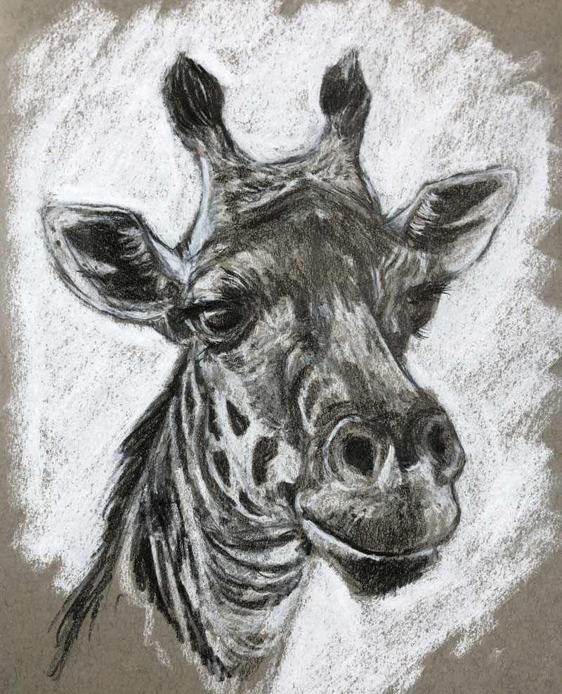 Sketch of a giraffe on toned paper