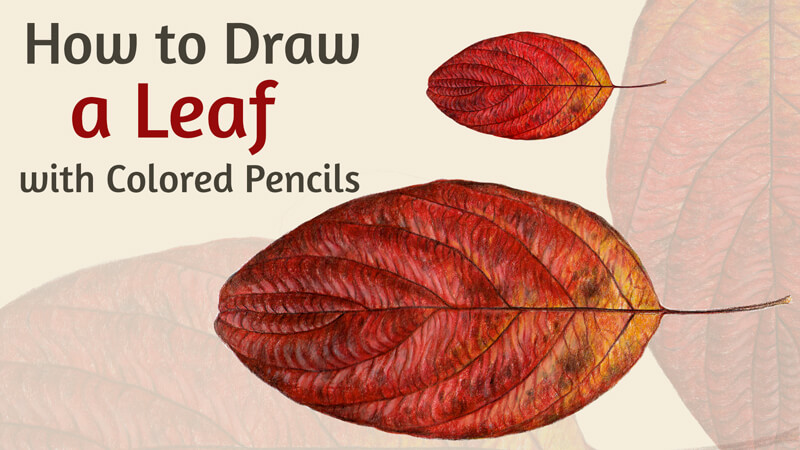 How to Draw an Autumn Leaf with Colored Pencils