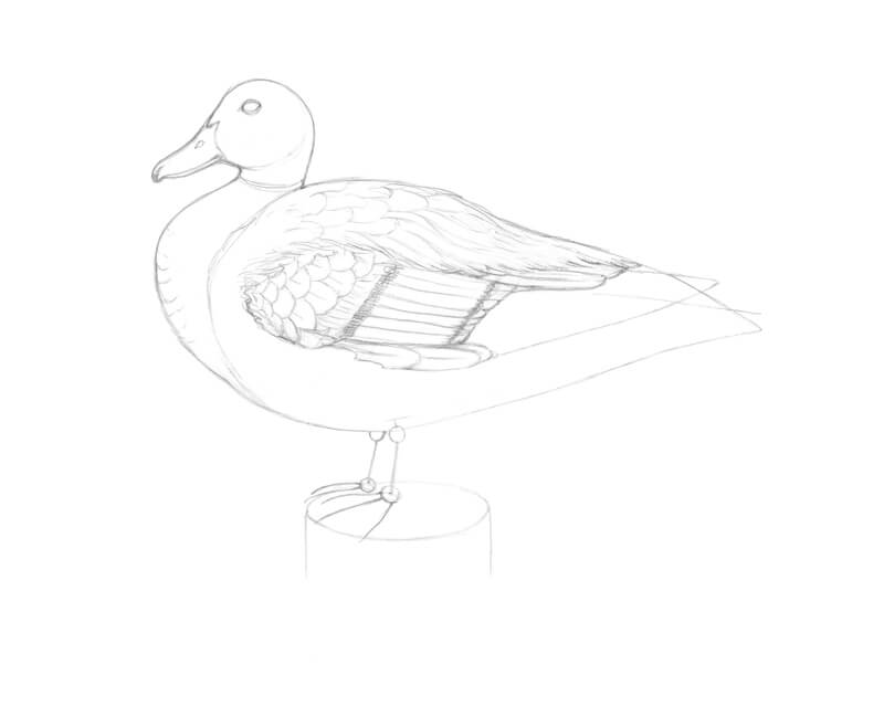 Drawing duck feathers