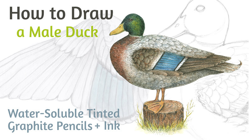 How to Draw a Duck with Ink and Water-Soluble Pencils